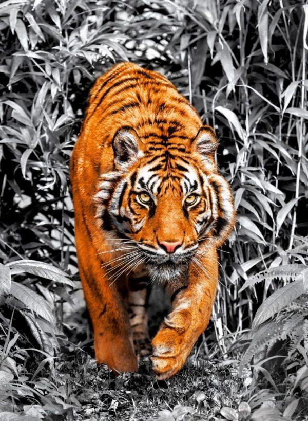 tiger-1000-pezzi-platinum